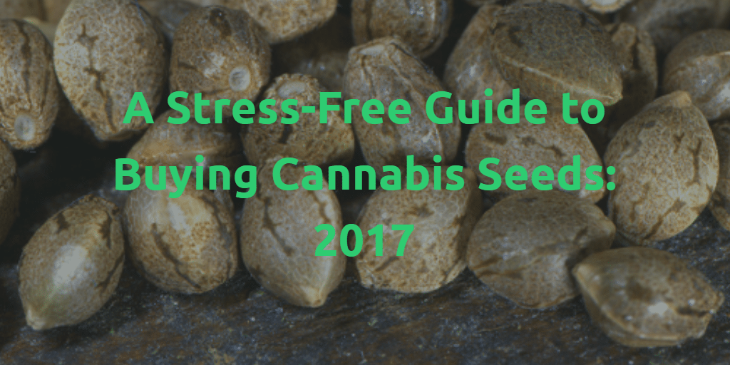 cannabis seeds buying guide 2017