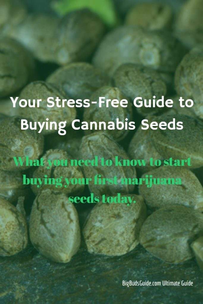 cannabis seeds buying guide