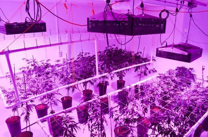 LED grow lights on gualala lightrail light movers