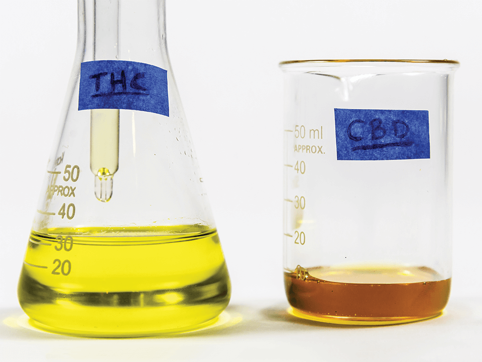 Cannabis oil vs. CBD oil
